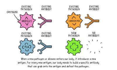 vaccines-antibody-illustration-01