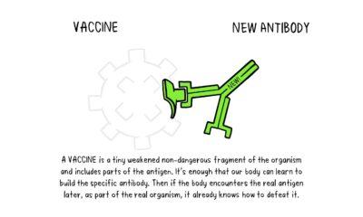 vaccines-antibody-illustration-02